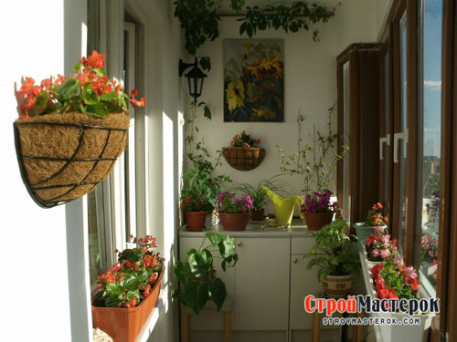 cvety na balkone foto